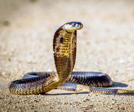 Мудрость змеи